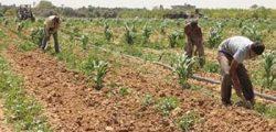 تخصيص 74 مليار جنيه استثمارات للقطاع الزراعي بخطة 2021-2022