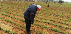 الفيوم الجديدة تضخ استثمارات بـ 100 مليون جنيه لزراعة ألف فدان خلال 2021