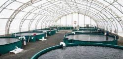 قناة السويس توقع اتفاقا مع شركة نرويجية لإنشاء مجمع مصانع لاستزراع الأسماك