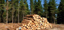 إيكو للتنمية تنشئ غابة شجرية على مساحة 5000 فدان ببنى سويف الجديدة