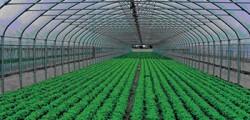وزير التموين يضع حجر أساس مشروع لصوب الخضروات والفاكهة بالوادي الجديد