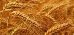 وزير سوداني: نتطلع لمشاركة مصر في مشروع لإنتاج القمح باستثمارات 1.5 مليار دولار